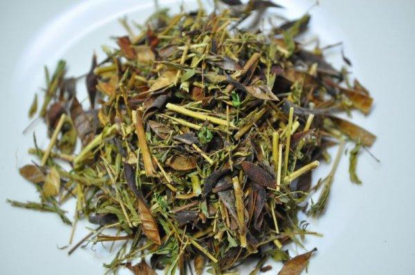 画像1: ハマ茶 カワラケツメイ茶 浜茶 ネム茶豆茶 弘法茶 (1)